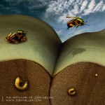 June Beetle Life Cycle_Photoshop_Illustration_JobyMiller