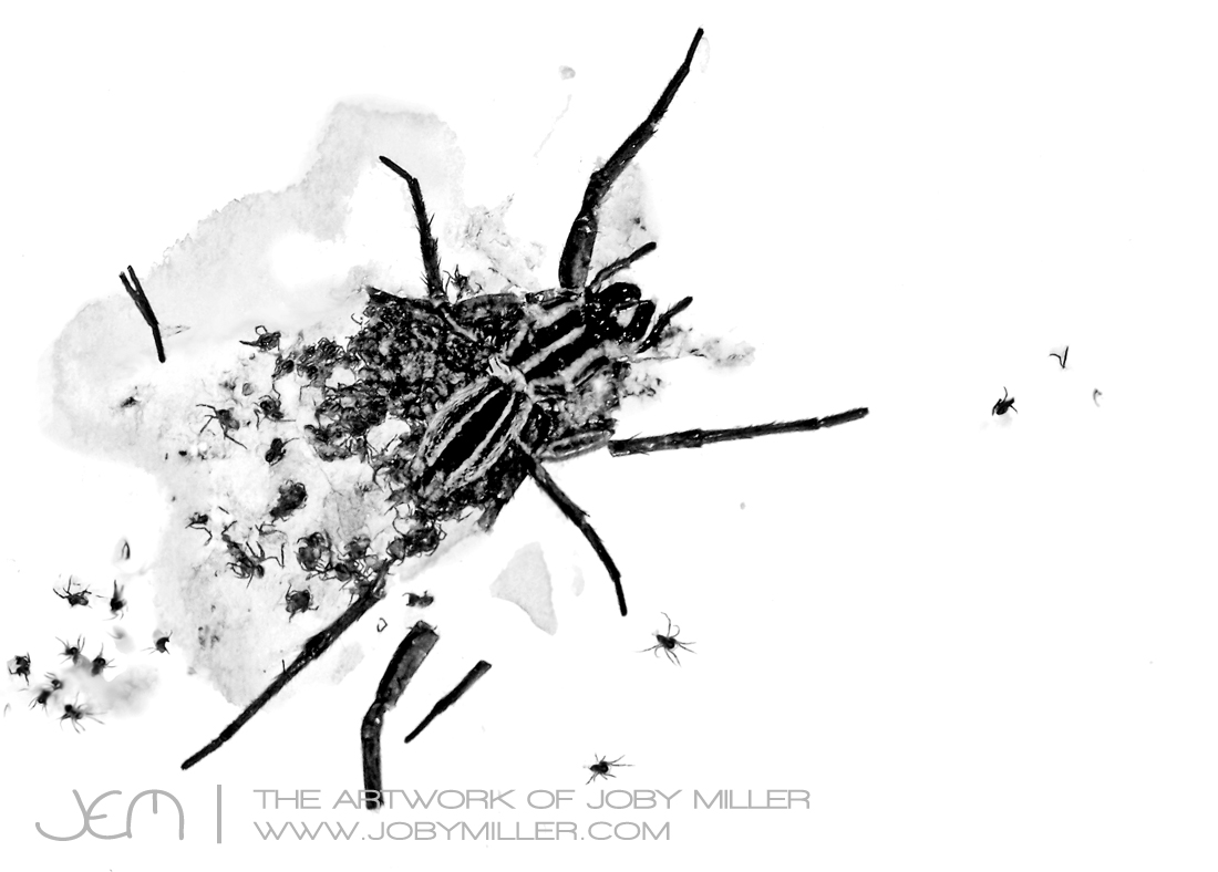 Scatter-Stone_Lithography_JobyMiller